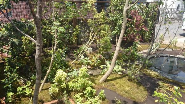 住宅の庭で雑木を池に向かって方向性を出して植えた。