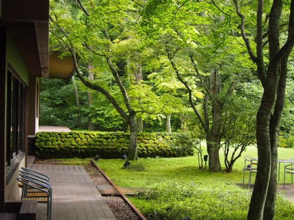 カフェ前の庭。「なんでもない庭」に心地良さを感じる。