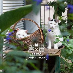 「庭×猫(犬)」をテーマにフォトコンテスト開催/ガーデンメーカー